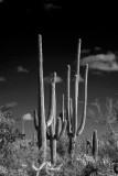 L9 Tre Caballeros (Tucson)