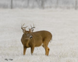 Eight Pointer in a Frosted Field at Dawn