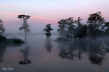 Lake Martin, Louisiana - 2009