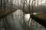 Abrams Creek in Fog
