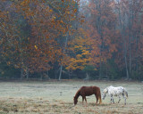 Horses on a Frosty Morning in Cades Cove