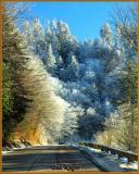 Roadway Beneath Newfound Gap