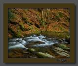 Cove Creek above the Cascades