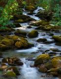 Cosby Creek Feeder