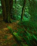 Beneath a Hemlock Tree