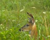 In Summer Grasses