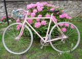 Souvenir du Giro 2010.