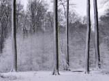 Forêt de Soignes... (galerie)