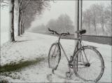 Portraits de vélos...