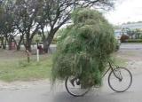 Bob Marley à vélo : ça c'est un scoop !