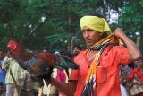 Cockfighting - Chattisgarh - Central India