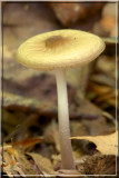 Mushroom049.JPG