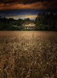 Callerton Landscape