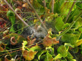 Lucky spider,perfect place for making a web!!