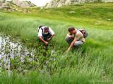 Utricularia minor ( Massif des Grandes Rousses )