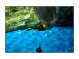Penguin, aquarium, Tokyo