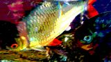 Diner Fish