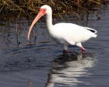 Merrit Island Birds and Wildlife