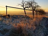 Frosty Morn 1