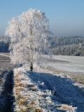 A Sprinkling Of Snow 2
