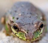 ? Frog