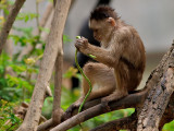 Monkeying About