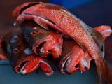 Puerto Ayora Fish Market 3
