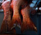 Puerto Ayora Fish Market 2