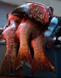 Puerto Ayora Fish Market 1