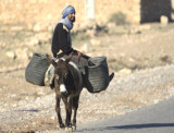 Donkey - Typical local transport - burrito