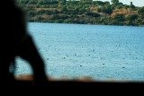 Birdwatching in Medina Lagoon (Jerez)