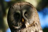 Birding photo Tour in Sweden - Landscapes and Wildlife - Fotos de pajareo y paisajes en Suecia