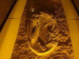 Fossil from a Crocodilian in one of the hotels in Boulamane Dades