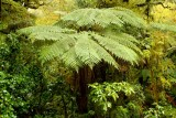Tree fern - very prehistoric looking