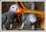 Parrot Paradise!