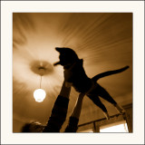 Woody, le chat volant( Best in show )