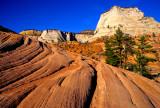 Navajo Sandstone, Zion National Park, UT