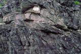 (SG19) Small fold bend thrust fault, Trenton Limestone near South Hero, VT