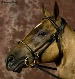 Golden Buckskin mare Rosanna