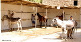 Animal Care in Egypt  -wash stands