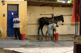 Better care, better relationship for horse & owner