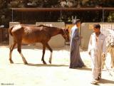 Very thin horse.