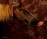 Trust-Chestnut-Horse 0827