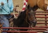 Roping-Horse-Painted-8281.jpg