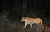 On Safari - Port Elizabeth, South Africa - Night