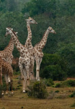 On Safari - Port Elizabeth, South Africa - Morning