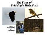 Birds of Bald Eagle State Park: Slide show