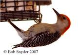 pa_birds