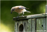 Some birds that utilize tree cavities and/or nesting boxes