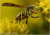 Macro Insect Photography: some Old Favorites made with the Nikon D70s: in the beginning of my transition.....